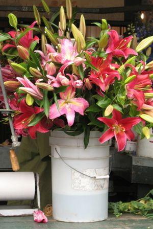 (Foto: greenliving.lovetoknow.com)