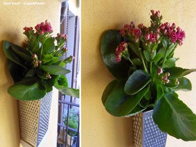 (Foto: lordflores.blogspot.com.br)