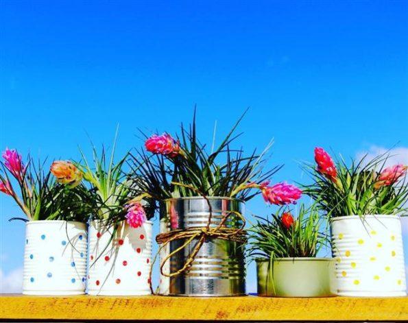 latas para plantas